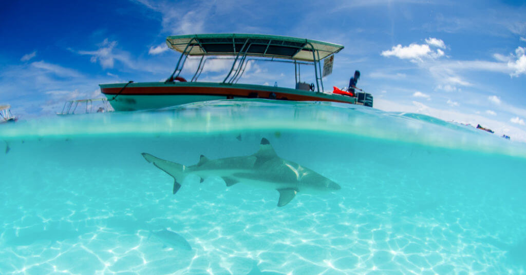 Shark swimming under a boat in crystal blue water signifying the hidden risk of providing legal subscription services